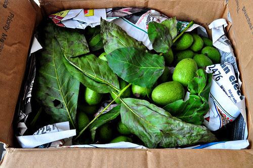 Green Walnuts Box