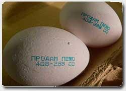 реклама на куриных яйцах