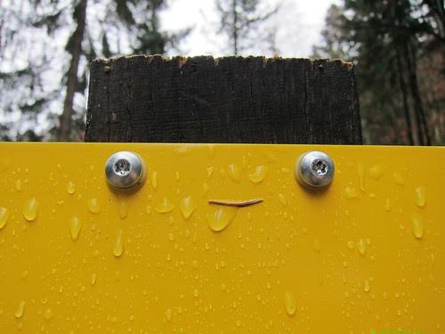 Yellow sign face, licking rain