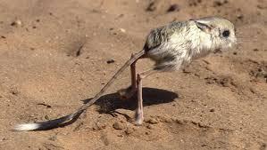 gambar binatang, jenis burung, foto hewan gurun, tanah tandus, keajaibah Alam, hewan yang kuat luar biasa menakjubkan