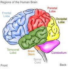 101 verità sul cervello