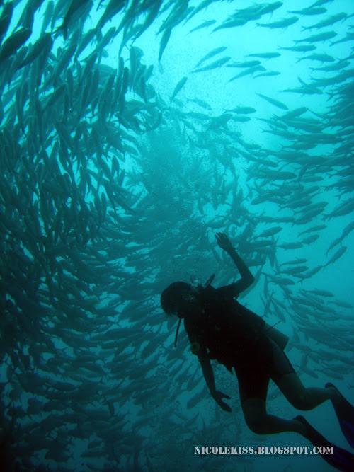 caryn and vortex of jackfish