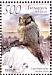 Northern Hawk-Owl Surnia ulula