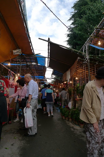 Busy ground cherry pod stalls during hozuki ichii