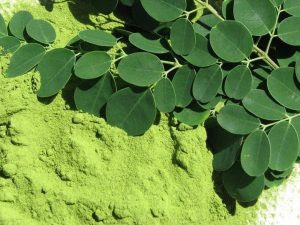 Moringa oxidation miracle