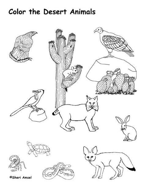 ideas  desert animals  plants
