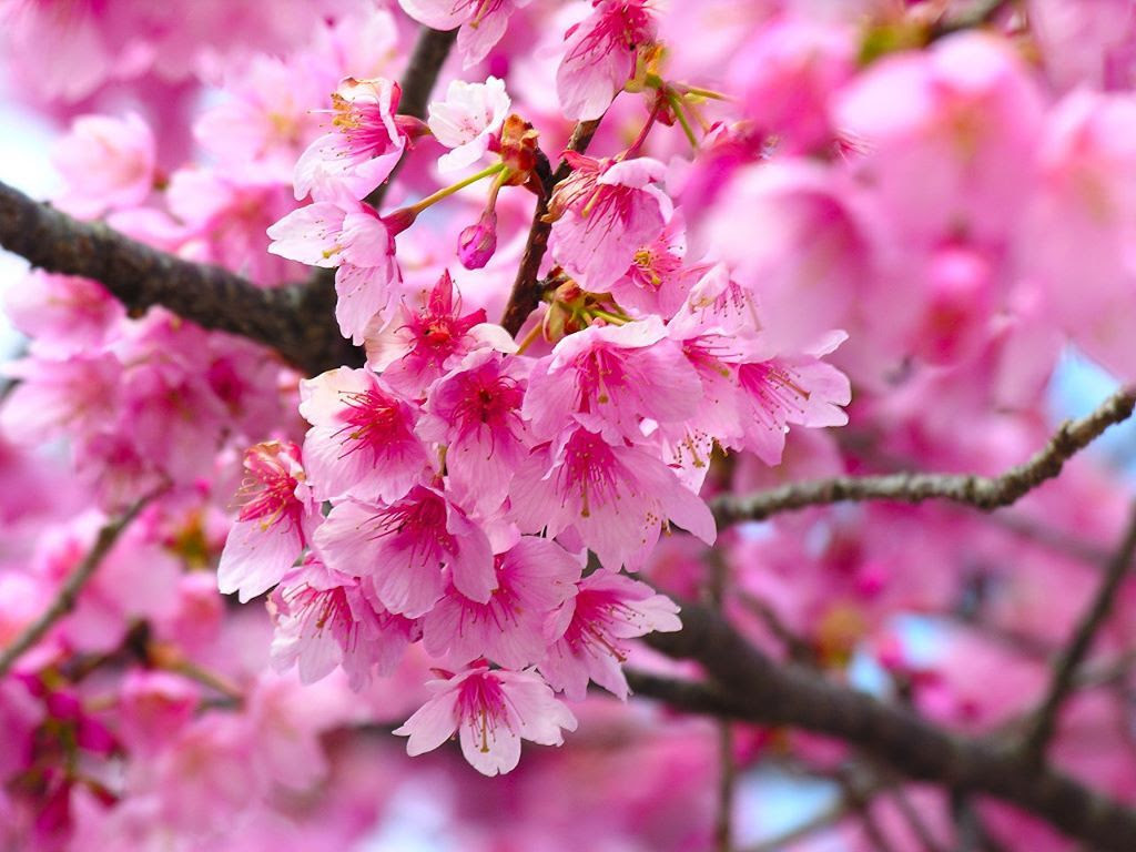 Inspirational Pink Colour Flowers Images Top Collection Of
