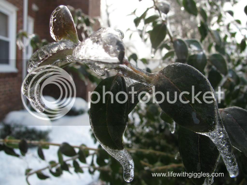 photo snow3_zps54fccebf.jpg