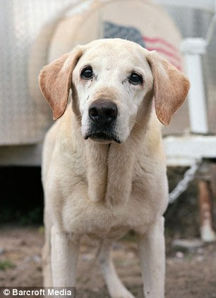 Guinness, 15, from Highland California, started working with Sheila McKee on the morning of the 13th and were deployed to the World Trade Center for 11 days