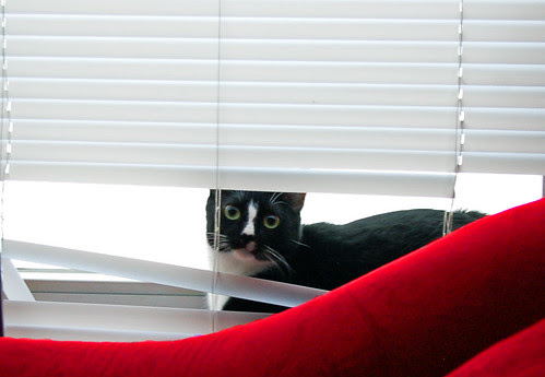 A tuxie in the blinds