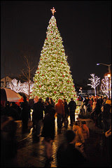 Tinley Park Christmas Tree