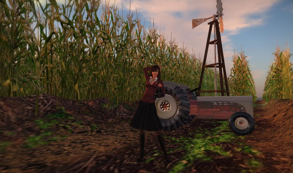 The Corn Field 1