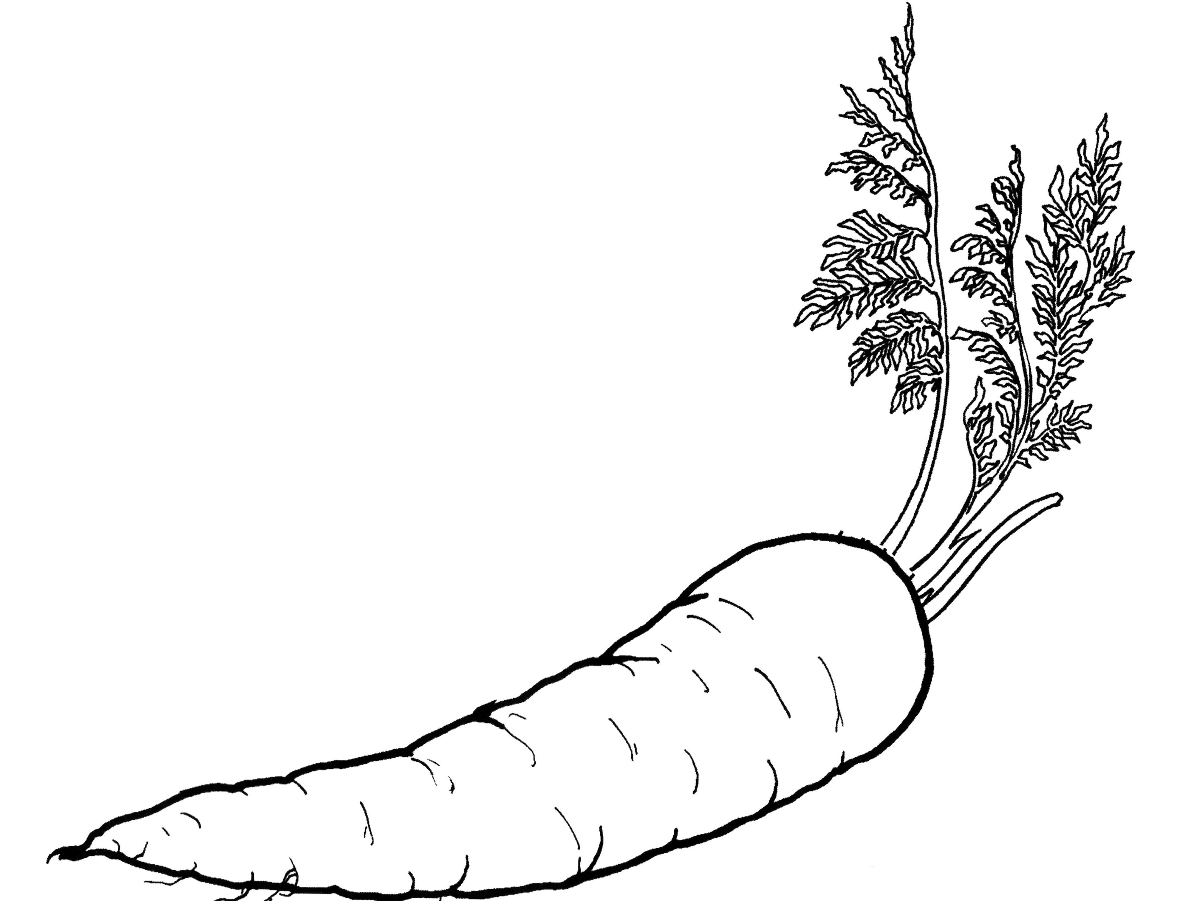 Mewarnai Sayur Sayuran O Warna