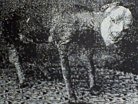 kudan japon (5)