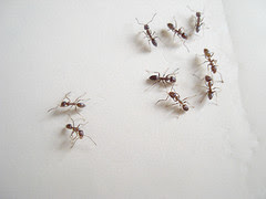 some ants
