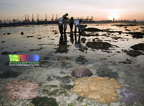Living reefs of Cyrene at sunrise