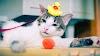 ¿Se puede (o debe) bañar a un gato?