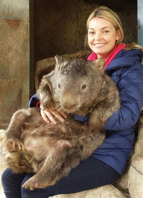 Meet Patrick, the World?s Oldest and Largest Living Wombat «TwistedSifter
