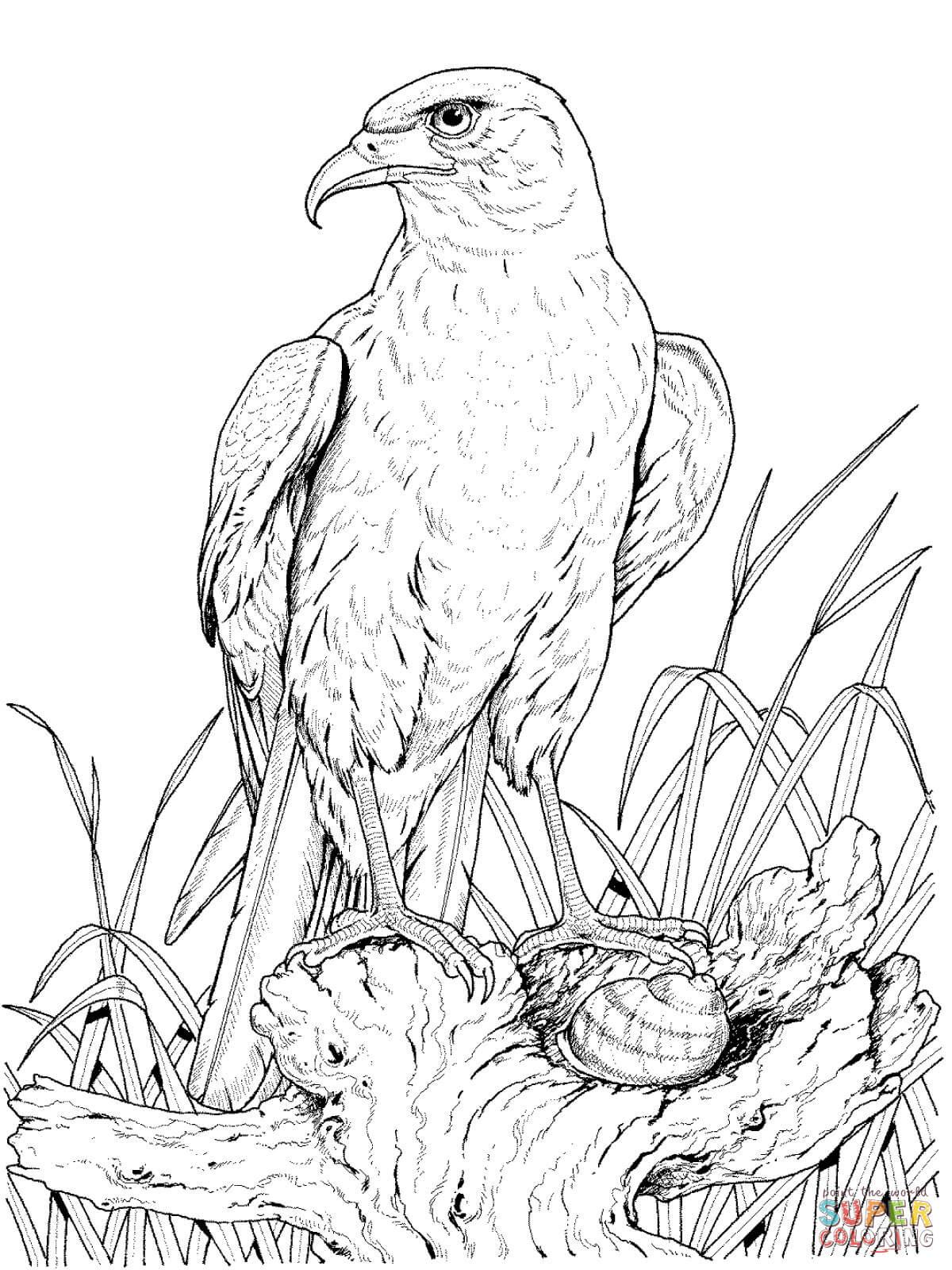 Steinadler auf Baumstumpf · Steinadler from Adler