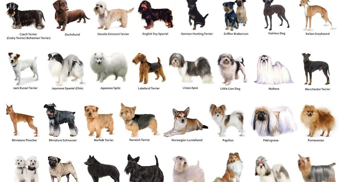 Картинки с породами собак и название этих собак, открытки картинка