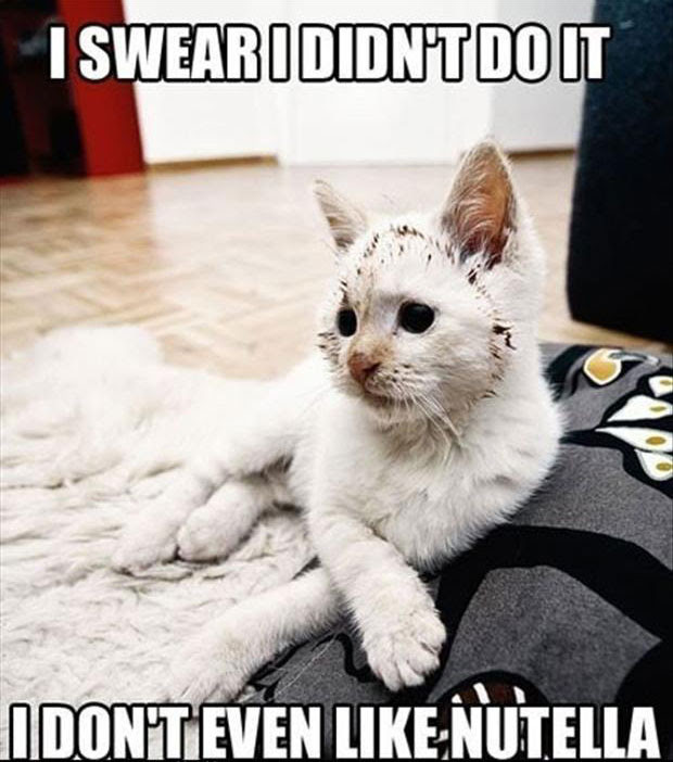 Lol Cats 50 Awesomely Funny Cat Photos To Crack You Up