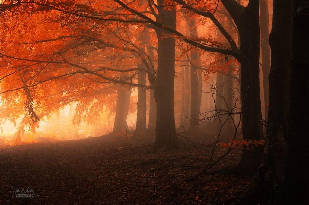 Os bosques outonais oníricos de um fotógrafo tcheco 12