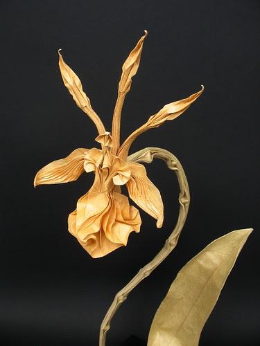 psychopsis-krameriana-origami
