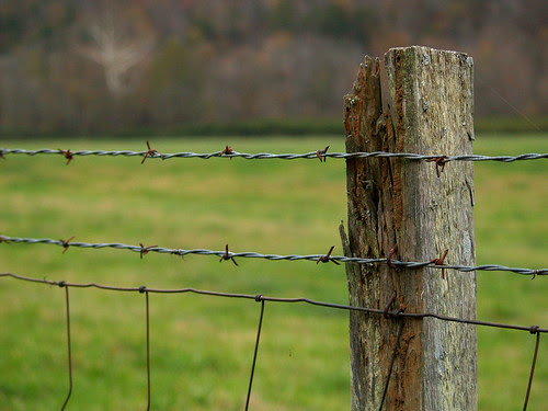 Barbed Wire by Boxley Barn