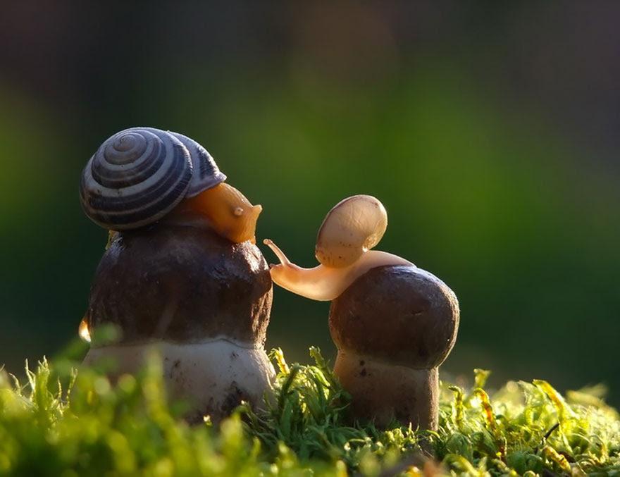 mushroom-photography-vyacheslav-mishchenko-5