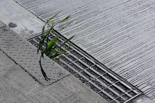 Grass, St. Johns Bridge