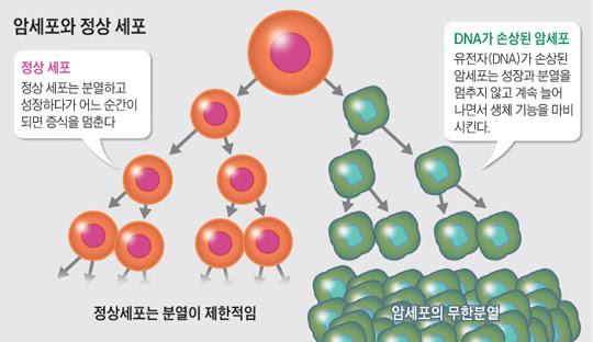암세포와 정상 세포