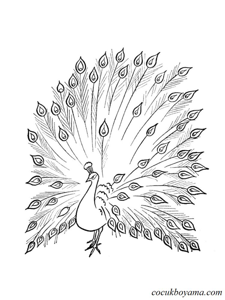 Tavus Kuşu 18 ücretsiz Boyama Resimleri