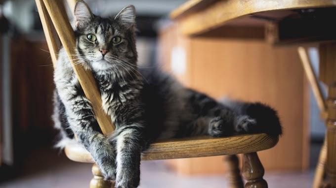 Consejos previos a la llegada de un gato al hogar