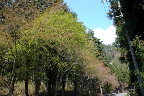 20110421-DSC_2368Nashinokidaira