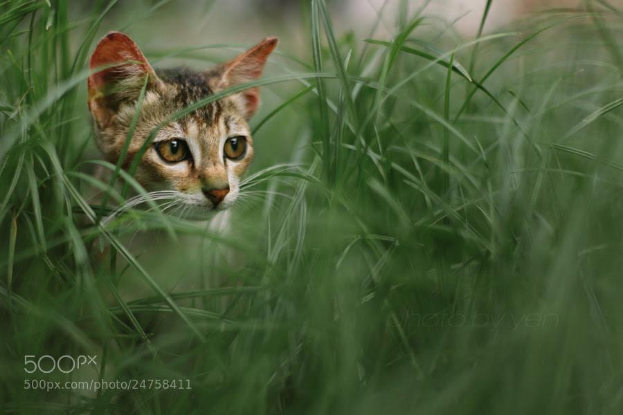 new kitten by Nazrin Shah (NazrinShah)) on 500px.com
