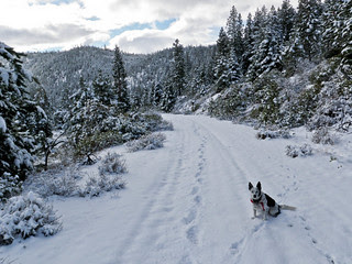 Snow Running With Ringo - Aspen Lake Road (The...