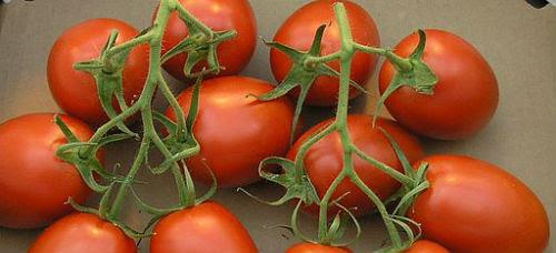 tomate512px-TomateTrossRomanaTyp