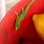 Geckos love cocoa!