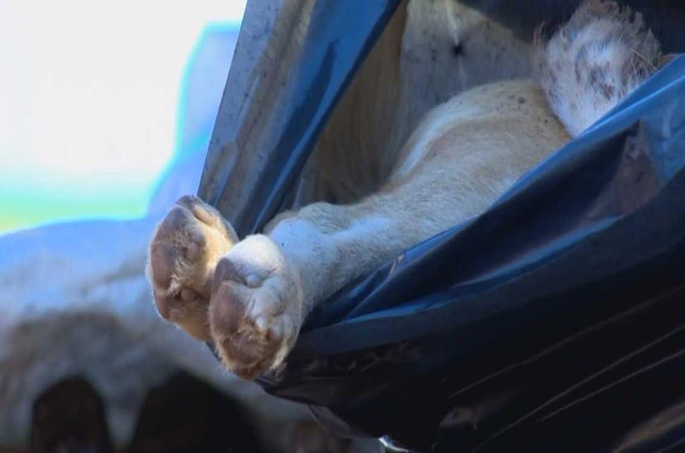 Cães foram encontrados mortos em Cachoeira do Sul (Foto: Reprodução/RBS TV)
