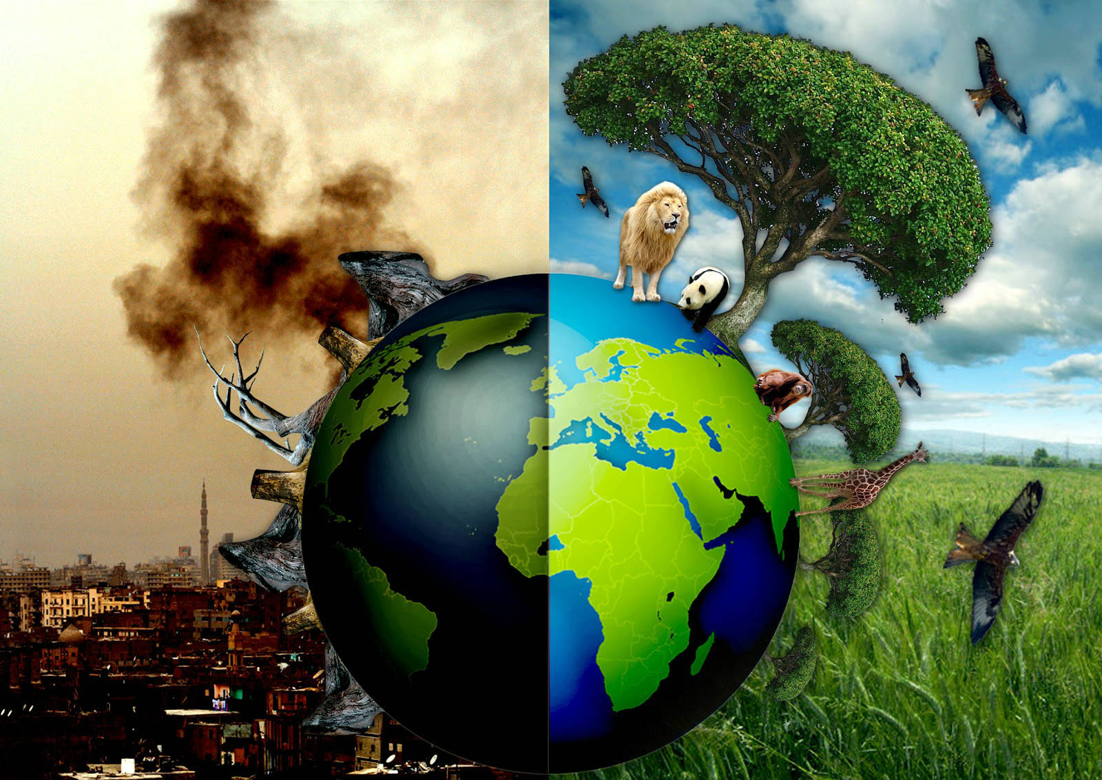 Journée mondiale de l'environnement 2017