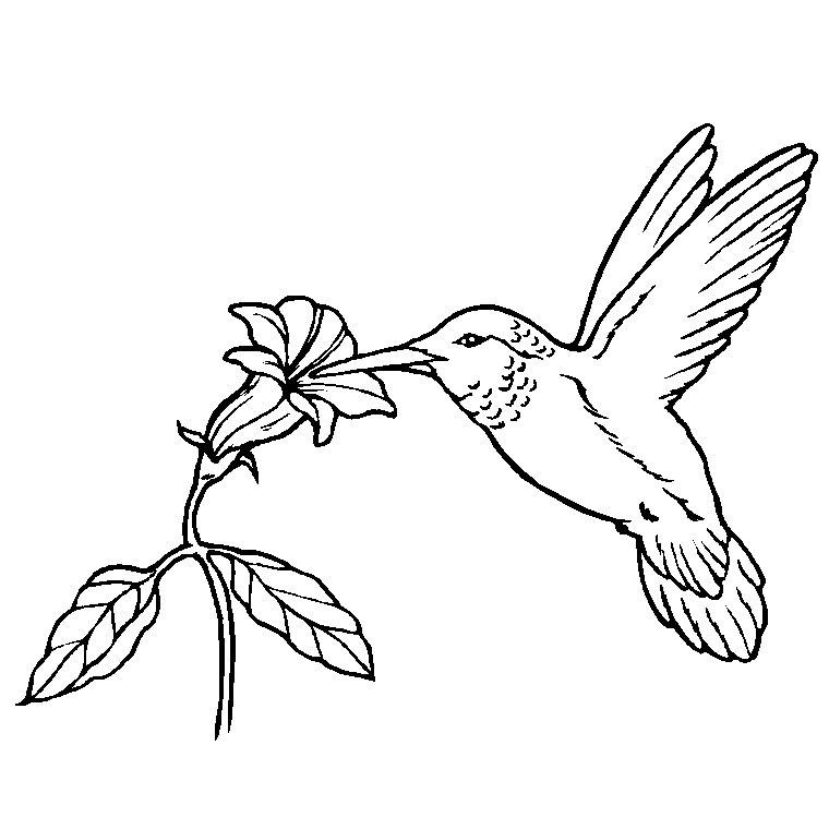 119 Dessins De Coloriage Oiseau à Imprimer Sur Laguerchecom Page 1