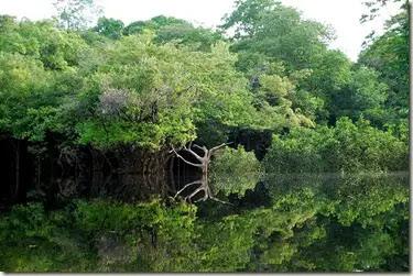 amazonia 21 de marzo, Día Forestal Mundial