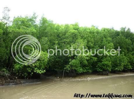 Hutan Paya Laut Matang