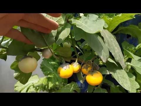 Ngỡ ngàng vườn rau sạch chỉ 25 m2 mà thừa sức cung cấp cho cả gia đình dùng