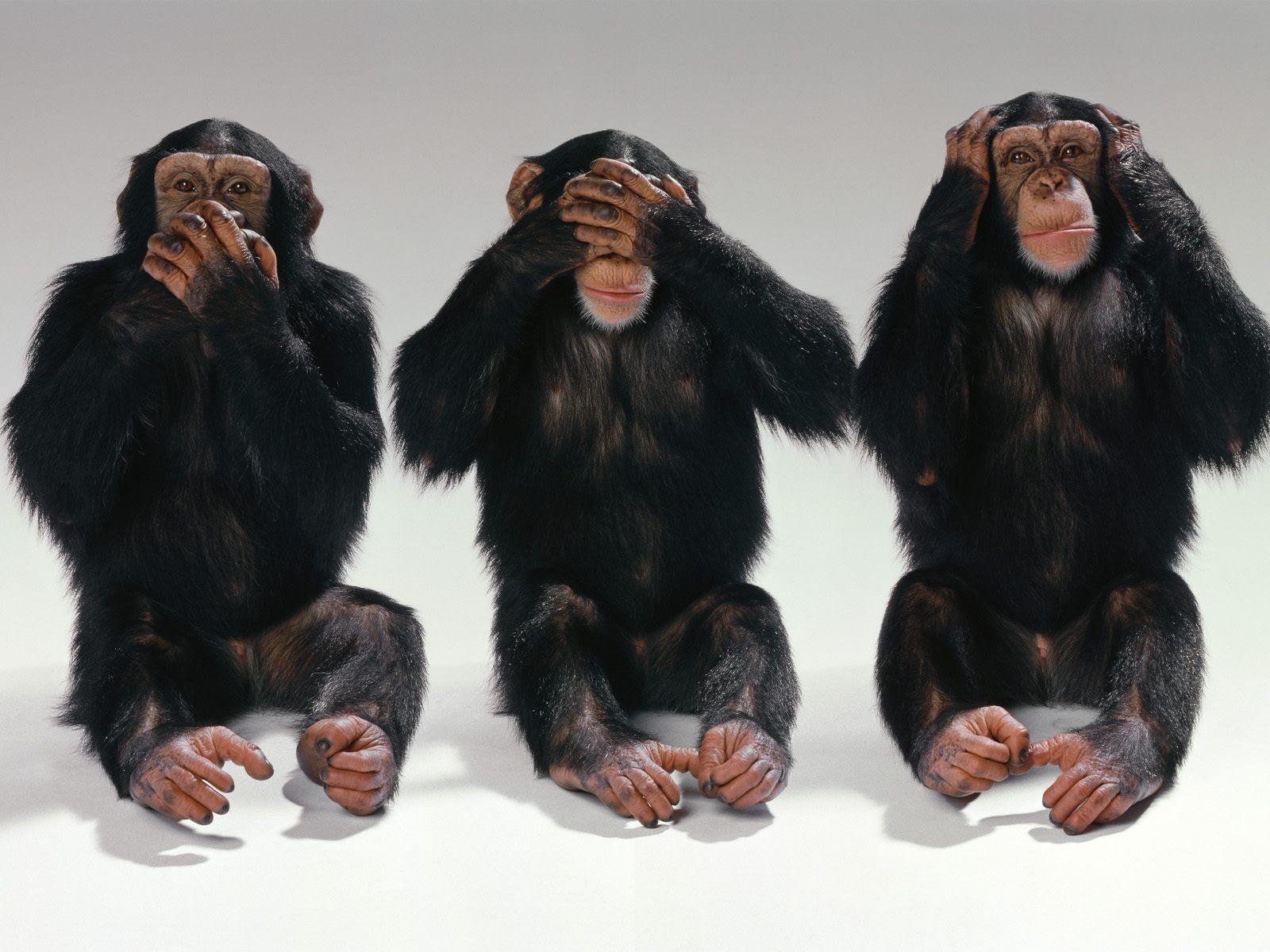 See No Evil Hear No Evil Speak No Evil Monkeys Photo 14750406