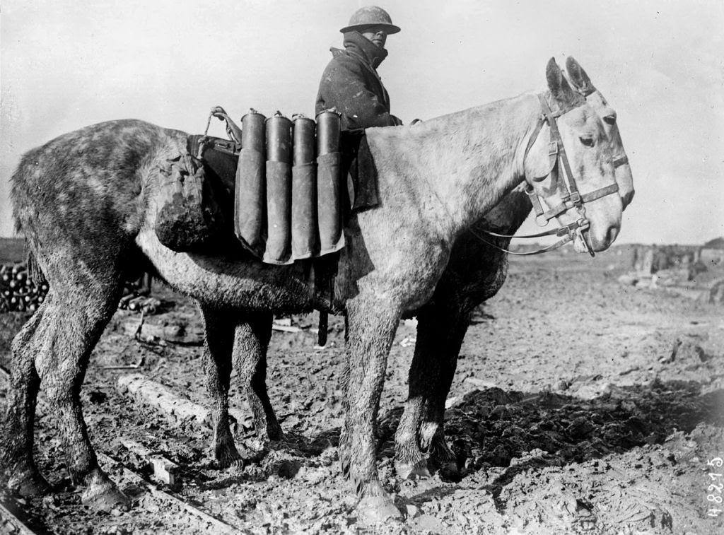Os animais também lutaram na Primeira Guerra Mundial 30