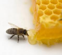 7 điều cấm kỵ khi sử dụng mật ong