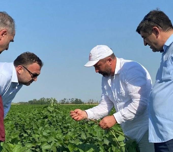 Ингушский фермер впервые получит урожай сои всентябре