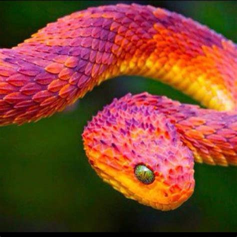 colorful snake animals pinterest