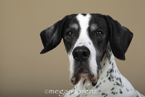 Pointer by Megan Lorenz